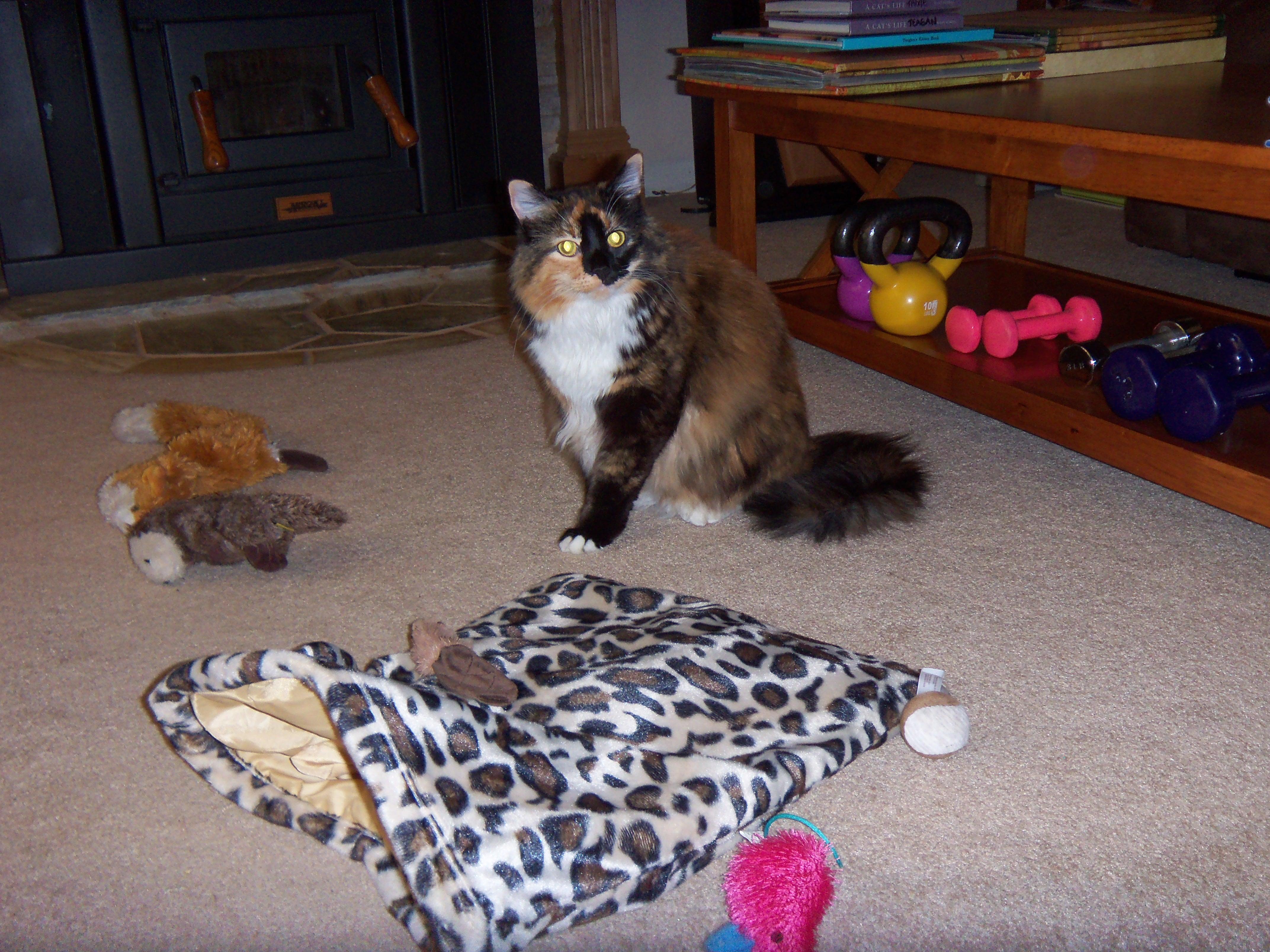 home-visit-cat-teagan