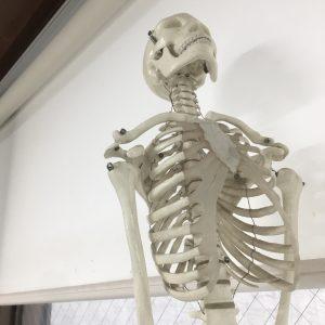 anatomy class for therapist