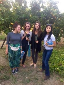 Rif Mountains: Backyard orchard
