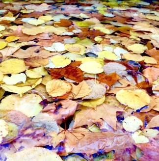 Aranjuez: Fallen leaves