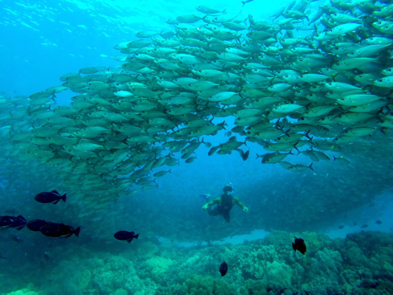 Free diving with a school of fish.