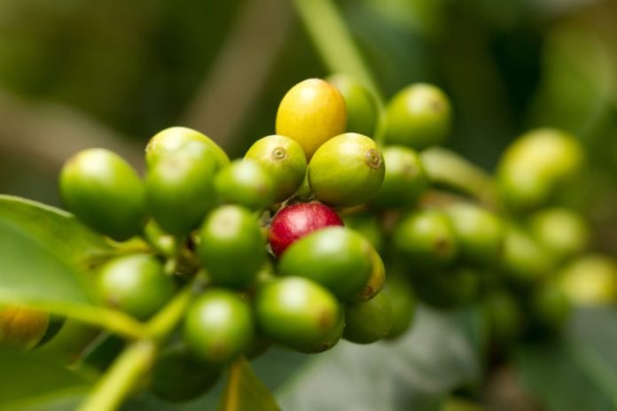 Coffee from the Big Island is guaranteed to be on any Big Island food list. It's that good!
