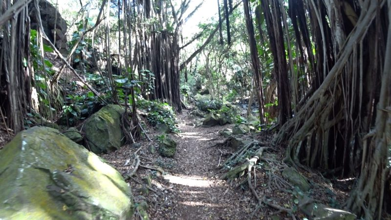 Kapena Falls trail.
