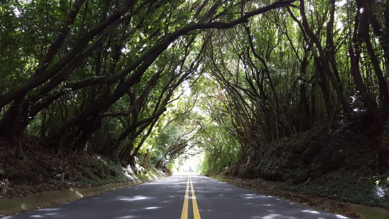 150 Things To Do On Oahu - Tree tunnel old pali road