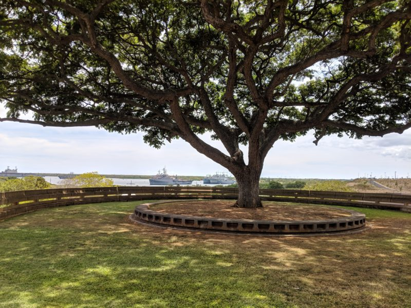 The Best Lookout For Pearl Harbor Ships Is At Leeward Community College - My favorite monkeypod tree at LCC.
