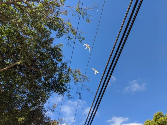 Mated for life. A pair fly and flirt in unison above us like synchronized swimmers.