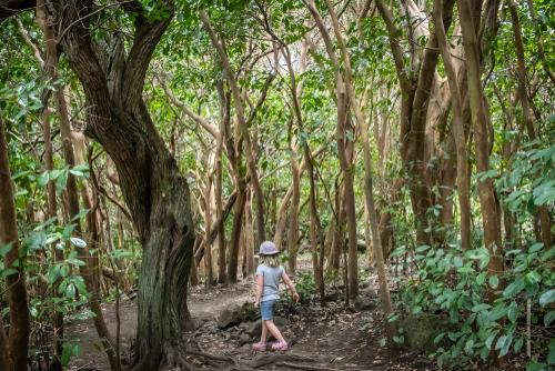 Wow! Kids can totally handle the Pipiwai Trail to Waimoku Falls in Maui!