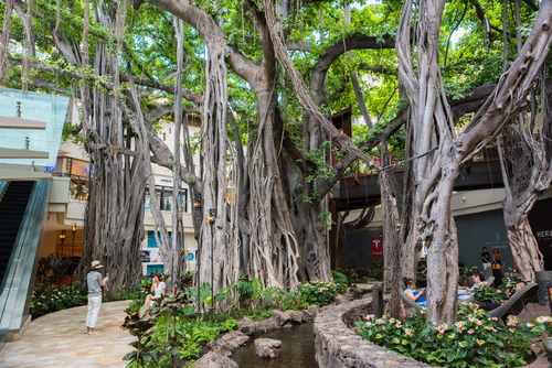 International Market Place's banyan tree has been fully incorporated into the architecture. Photo Credit: Michael Gordon / Shutterstock.com