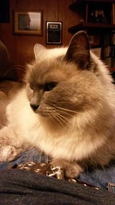 Mom's cat, Tommi
