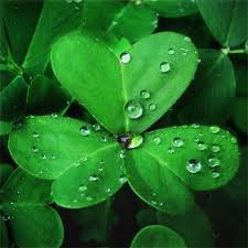 St. Patrick used the shamrock to explain the trinity