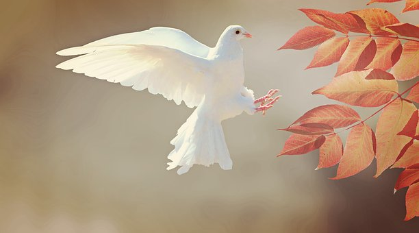 Traditions of Christmas: Doves