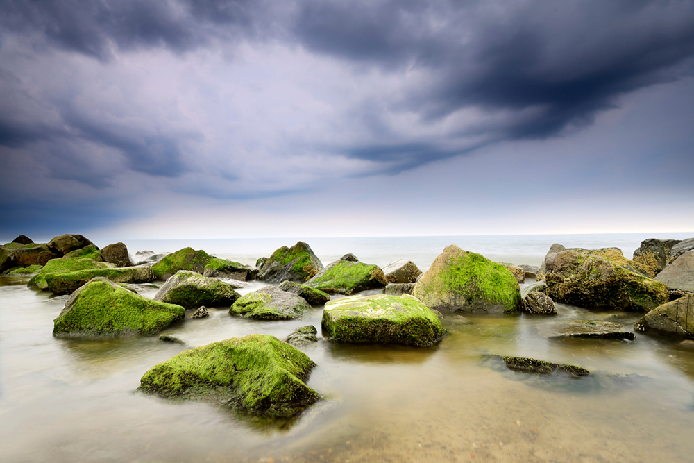 Alge beklædte sten ved Spidsbjerg Strand