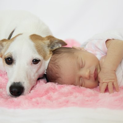 The Dog and the Baby
