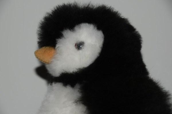 Pinguin zwart wit kop