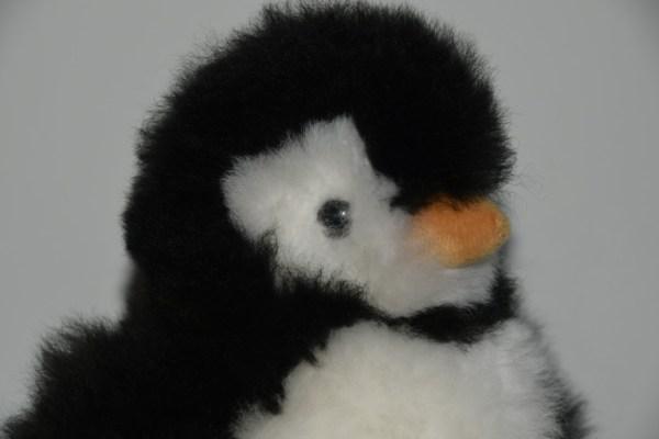 Pinquin zwart wit kop