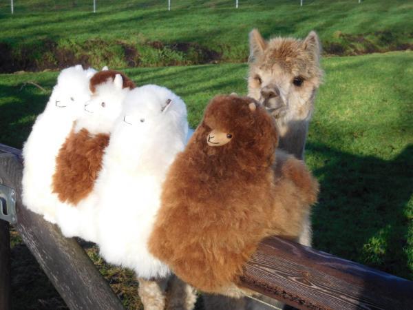 alpaca 4 op hek 30cm