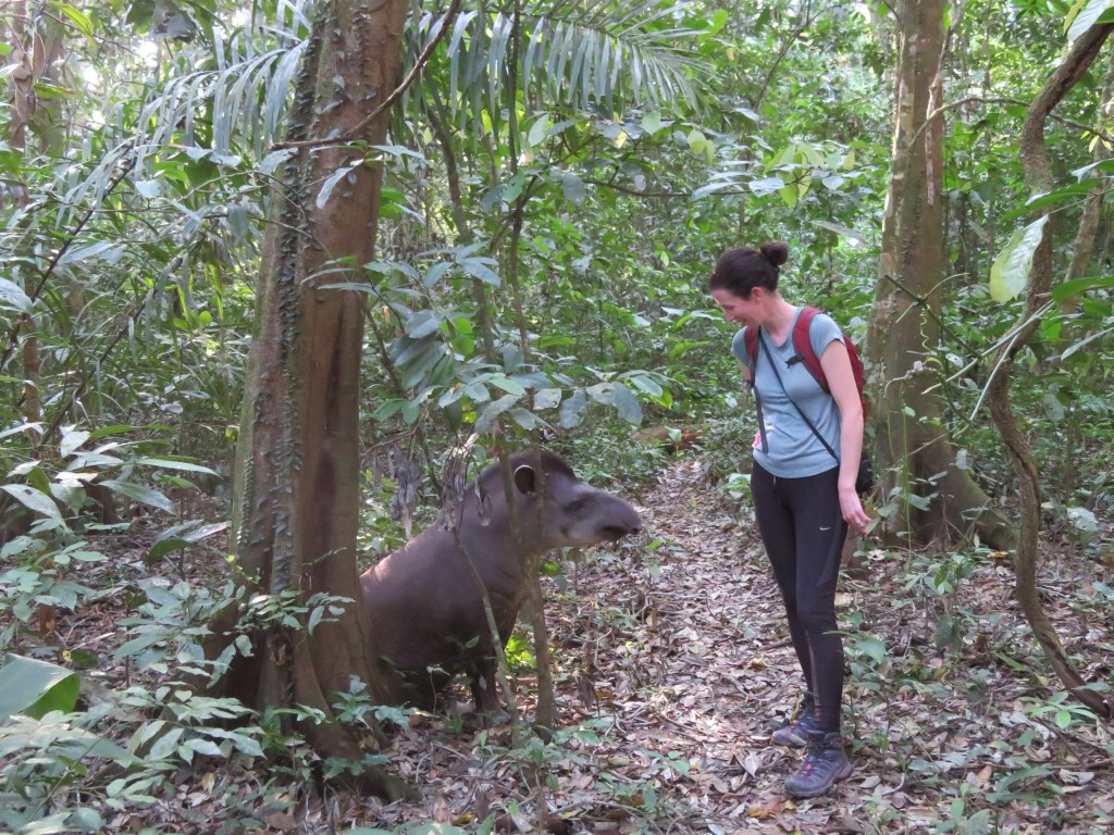 Amazon Rainforest | Tapir