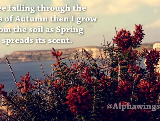 Spring Life Quotes | Alphawings