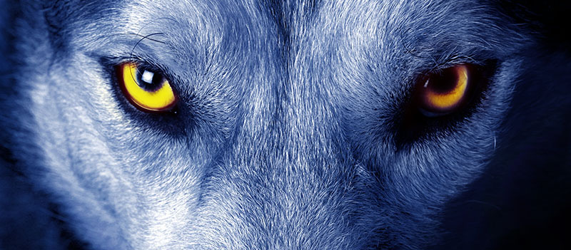 Alpha Wolf Nutrition Eyes