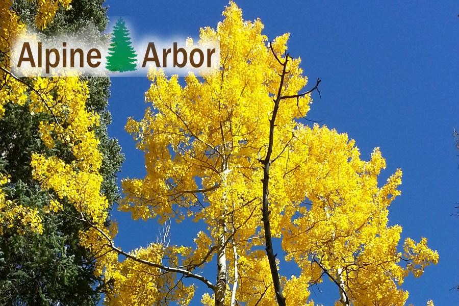 Alpine Arbor Fall Leaves