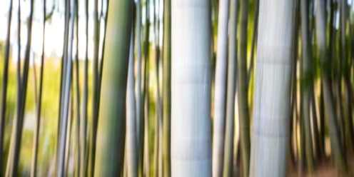 Bamboo Abstract • Kyoto | A long exposure abstract of the beautiful bamboo grove at the Kodai-ji Temple in Kyoto, Japan.