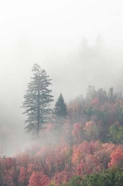 Justin_Soderquist_Misty Autumn Morning