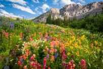 Richard_Ansley_Albion Wildflowers