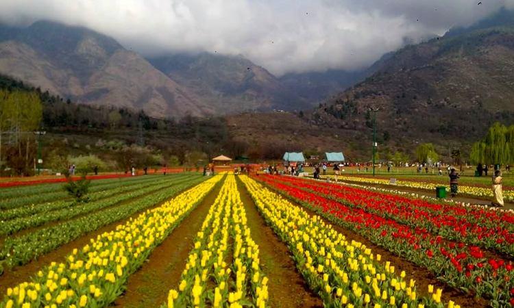 Kashmir tulip tour package