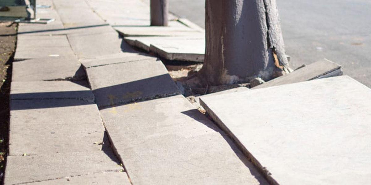 root damage sidewalk