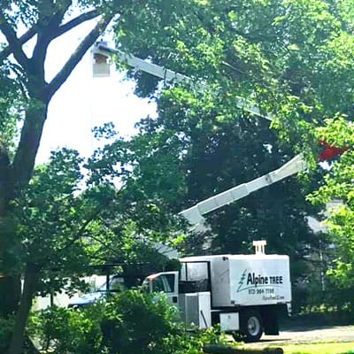 Alpine Tree bucket truck beside a tree