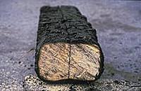 Огнезащита деревянных конструкций альпинистами