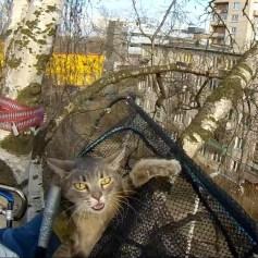 Снять кошку с дерева альпинистами