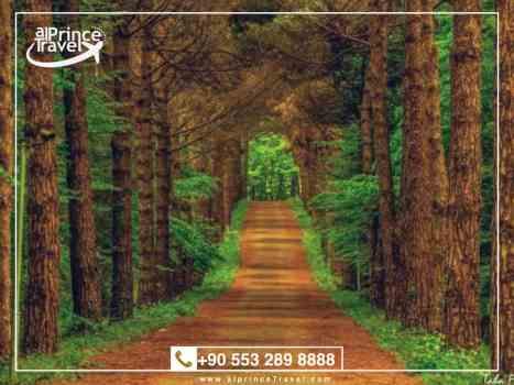 جدول سياحي في تركيا لمدة 11 يوم - غابات بلغراد.001