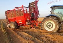 صورة الزراعة : استمرار حصاد البنجر وتوريد 60 ألف طن لمصانع السكر