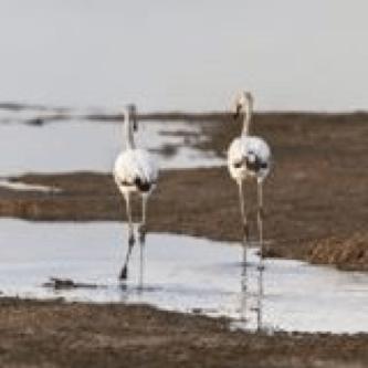 Postales desde el cielo: Caminantes