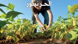 تفسير حلم الزراعة في المنام للعزباء والمتزوجة والحامل