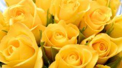 تفسير حلم الورد والفل في المنام