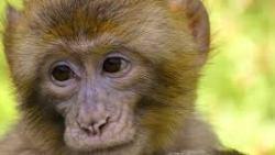 تفسير وجود القرد في المنزل في المنام