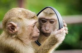 تفسير حلم نكاح القرد في المنام