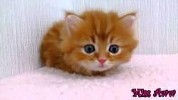 تفسير حلم إطعام القطة في المنام