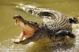 تفسير حلم ضرب التمساح في المنام