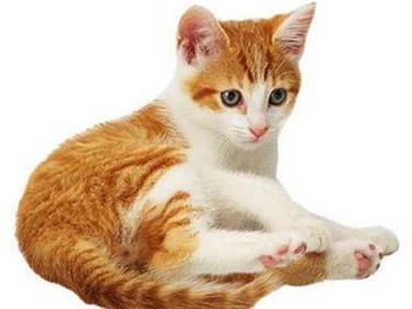 تفسير رؤية القطط الكثيرة في المنام
