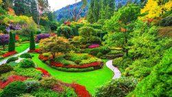 تفسير حلم تنظيف الحديقة في المنام