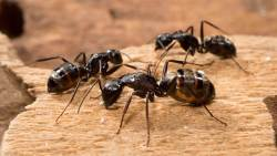تفسير حلم النمل الأبيض في المنام