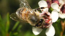 تفسير حلم الخوف من النحل في المنام