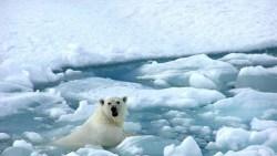تفسير حلم المشي على الجليد في المنام