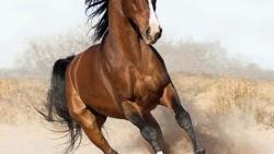 تفسير حلم حصان يلاحقني في المنام