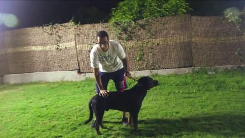 صفات كلب تشاو تشاو