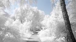 تفسير حلم الثلج للعزباء