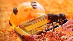 تفسير حلم رؤية النمل الأسود في المنام لابن سيرين